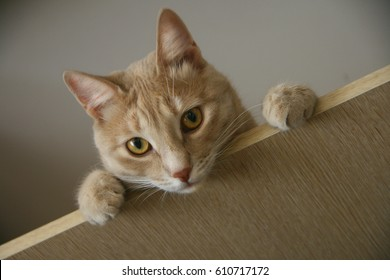 Ginger cat with bright eyes looking from above