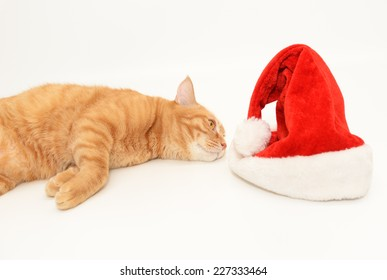 Ginger cat and christmas cap