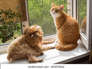 Ginger the cat and the dog sit on the windowsill and bask in the sun