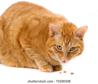 Ginger cat eating