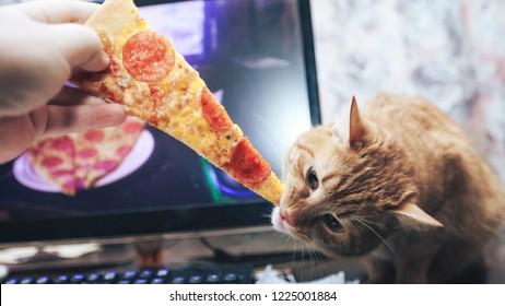 Ginger Cat Eating Pizza