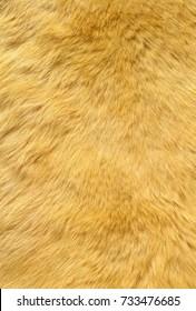 ginger cat fur textur