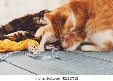 Ginger cat and kitten. Mother cat takes a kitten by the scruff of the neck and carries to the safe place. Mom and child, maternity, care.