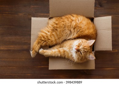 Ginger cat lies in box on wooden background. Fluffy pet is doing to sleep there.