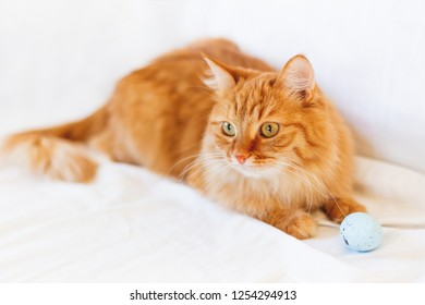 Ginger cat lies on bed with light blue toy ball. The fluffy pet comfortably settled to sleep or to play. Cute cozy background, morning bedtime at home.