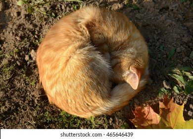 Ginger cat like the gentle autumn sun.