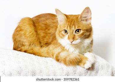 ginger cat looking