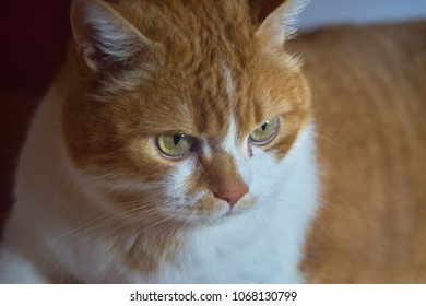 Ginger cat looking down