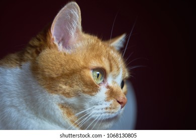 Ginger cat looking to the right