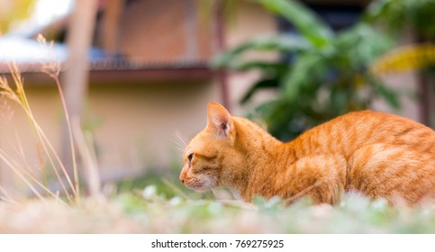 Ginger cat lying outdoor and is looking through something
