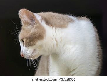 Ginger cat on black background background