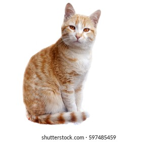 Ginger Cat on white background. Animal portrait.
