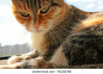 Ginger cat on the windowsill