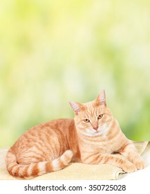 Ginger cat over green background in veterinary clinic.