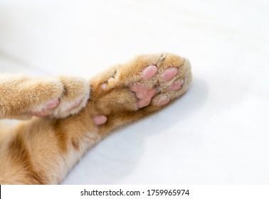 Ginger cat paw on floor
