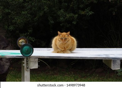 Ginger cat Poppet chilling on the scaffold