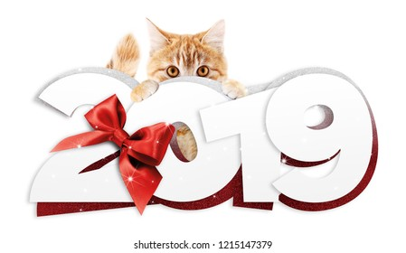 ginger cat showing happy new year 2019 text with red ribbon bow isolated on white background, christmas signboard or gift card for pet shop or vet clinic