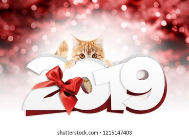 ginger cat showing happy new year 2019 text with red ribbon bow on blurred red christmas lights, signboard or gift card for pet shop or vet clinic