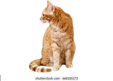 Ginger cat sits and looks away, turning his head in the sideway isolated on white