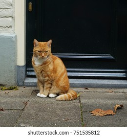 Ginger cat sitting in front of the entrance door