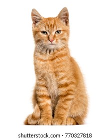 cat sitting images stock photos  vectors  shutterstock