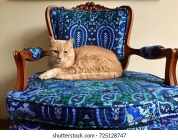 Ginger Cat sitting on a arm chair