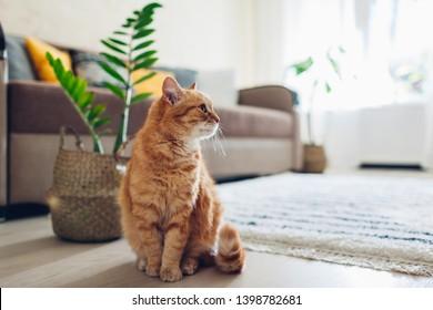 Ginger cat sitting on floor in cozy living room. Interior decor