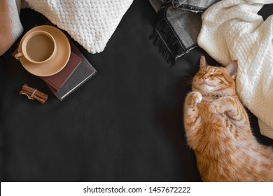 Ginger cat sleeping on cozy black sofa. Home coziness with cat, soft plaid, coffee and books. Cozy home and hygge concept, copy space.