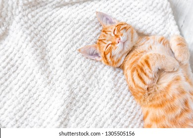 Ginger cat sleeping on soft white blanket, cozy home and relax concept, cute red or ginger little cat.