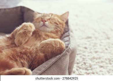 A ginger cat sleeps in his soft cozy bed on a floor carpet, soft focus