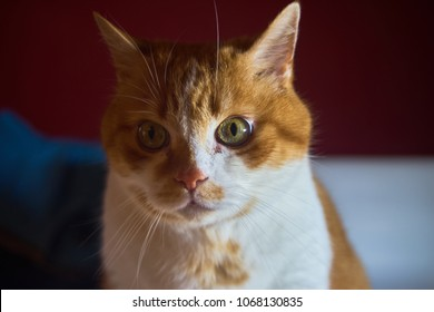 Ginger cat slightly looking to the right