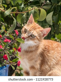 Ginger cat smelling flowers