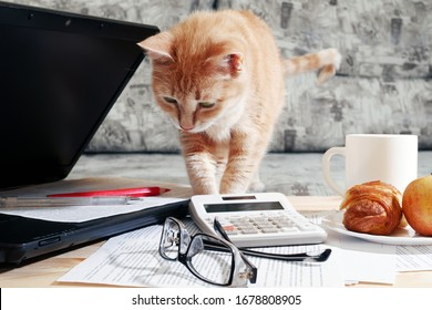 ginger cat standing on table and looking at laptop and working papers, working from home concept