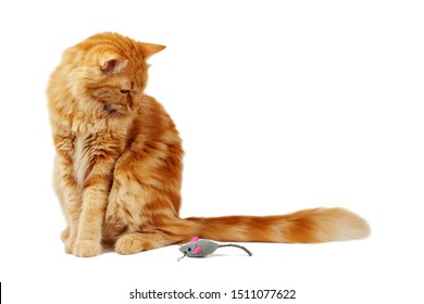 Ginger cat staring at a toy mouse, isolated on white background