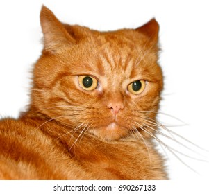 ginger cat with surprise face