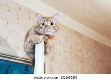 Ginger Cat at the Top of the Door at Home