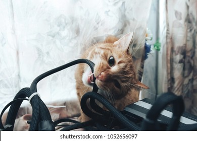 Ginger Cat tries to Bite the Wires on Mining Computer Open Stand