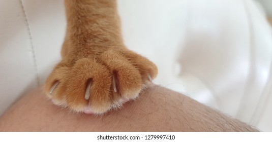 ginger cat's paw with the extended claws grasping owner leg.