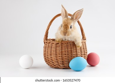 Ginger Easter bunny rabbit in basket with colorful eggs, holiday concept