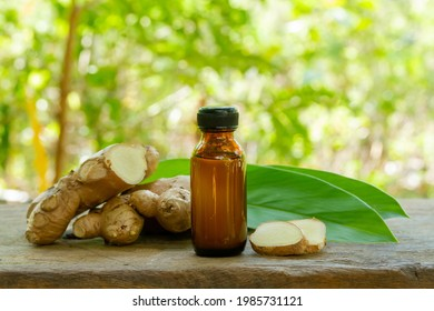 Ginger essential oil in bottle and fresh ginger on rustic wooden with blur background on sunny day. The scientific name is zingiber officinale. Herbs for health care concept.