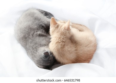 Ginger and grey kitten sleeping on white cloth