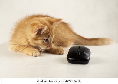 ginger kitten with the computer mouse on a white background