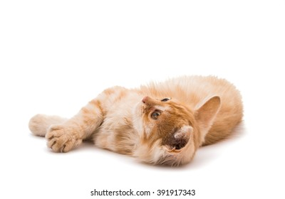 ginger kitten isolated on white background