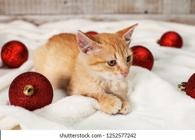 Ginger kitten lying among christmas ball decorations looking focused