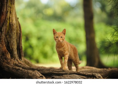 Ginger kitty cat outdoor portrait