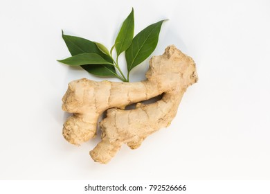 Ginger over white background