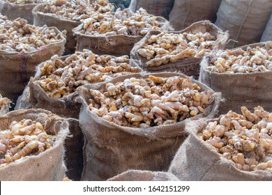 Ginger roots harvested from Field. Ready for selling. Background related to ginger harvesting.