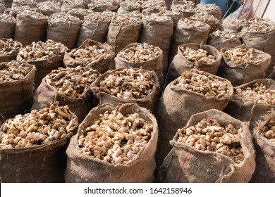 Ginger roots harvested from organic Field stored in gunny bags. Ready for selling. Background related to ginger harvesting.