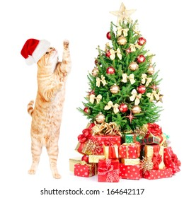 Ginger santa cat and Christmas tree isolated white background.