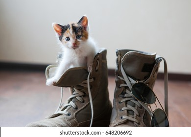 Cat in Boots Images, Stock Photos